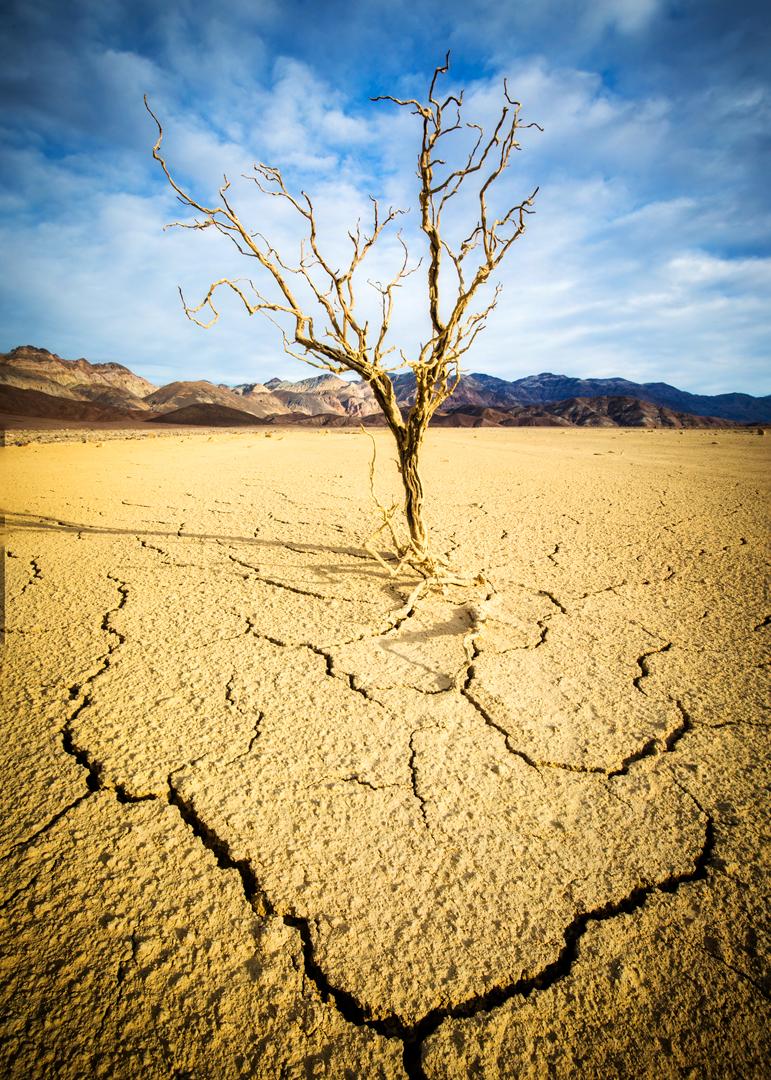Death Valley Mudscape_5x7.jpg