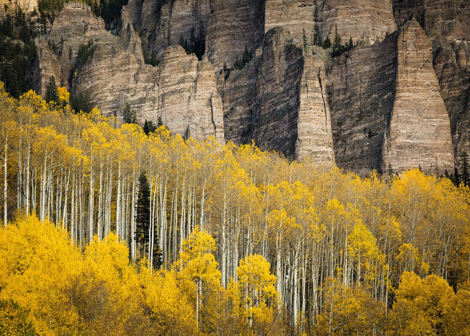 Owl Creek Pass Aspens_5x7.jpg