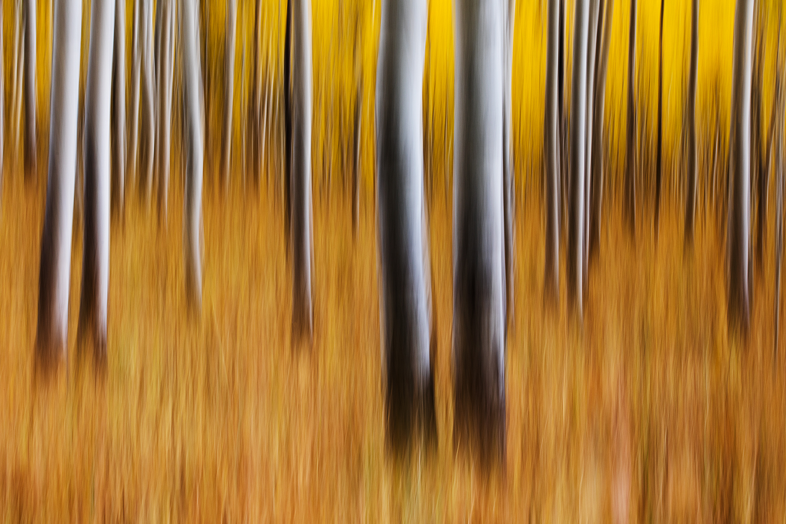 Aspen Blur.jpg