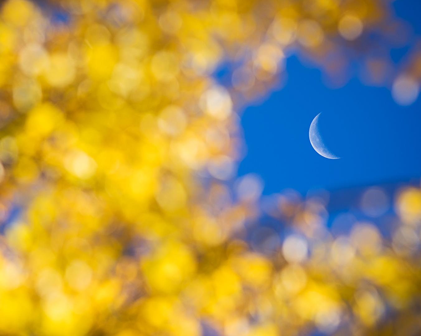 Golden Crescent_IG.jpg