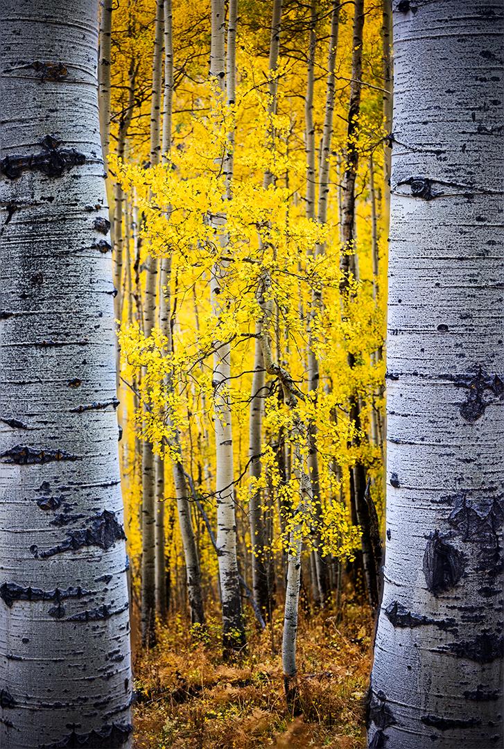 Owl Creek Forest Frame Vert.jpg