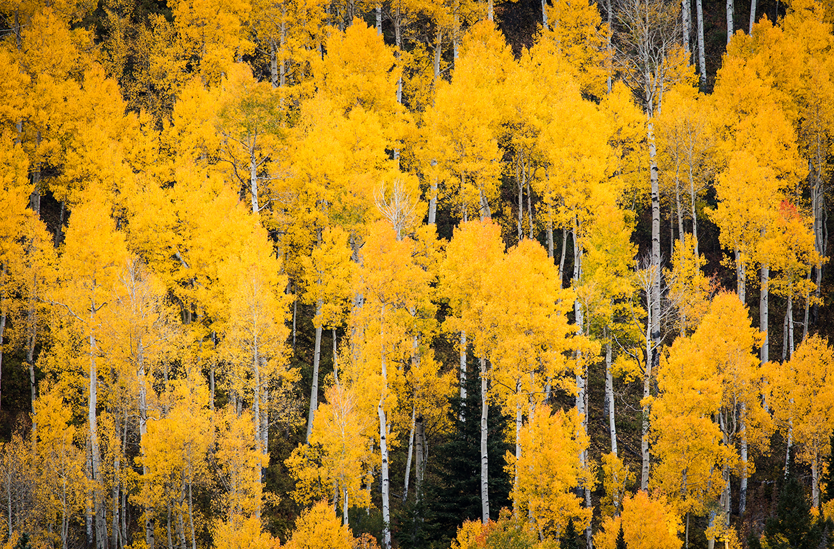 Owl Creek Canopy_IG.jpg