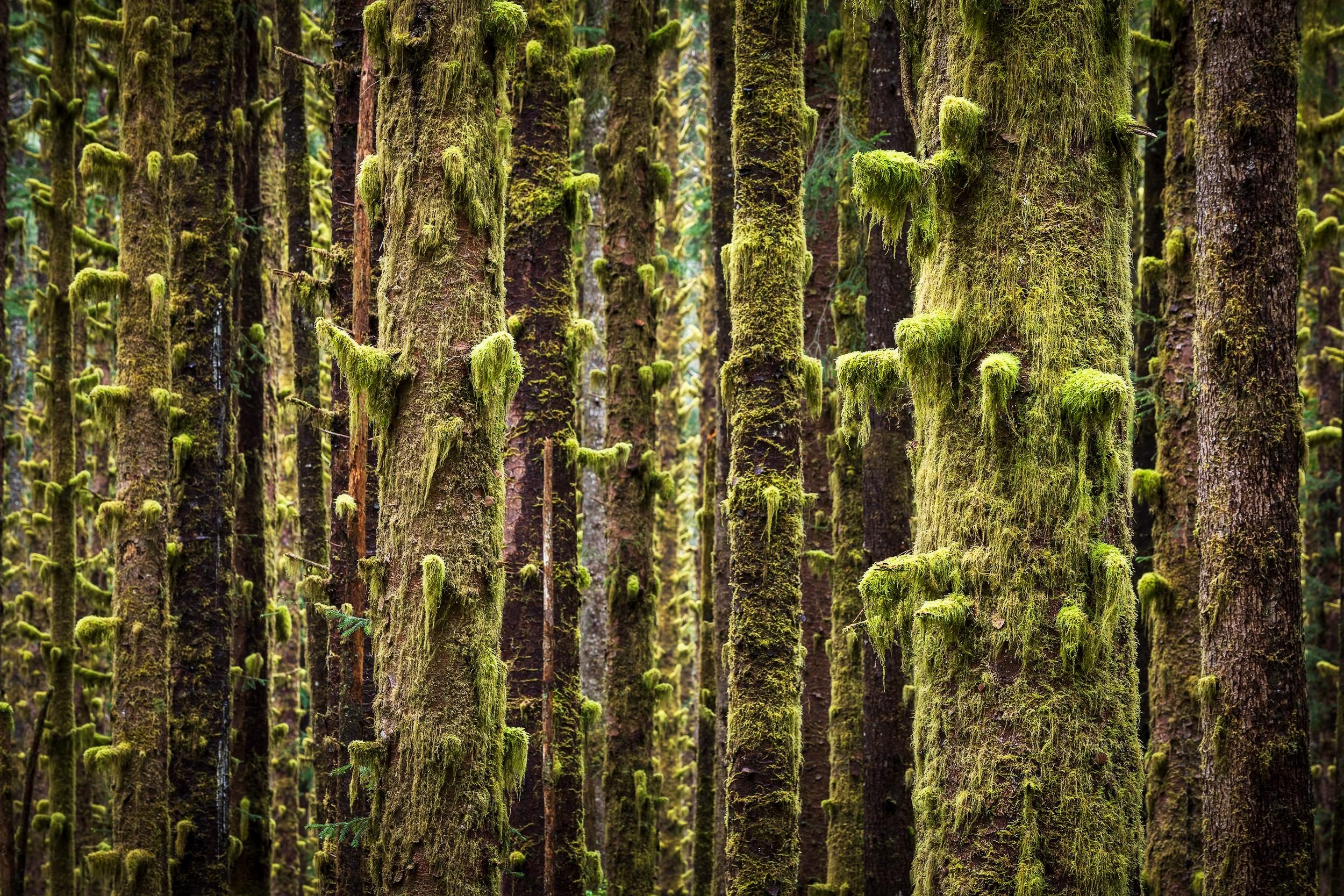 Mossy Close-Up.jpg