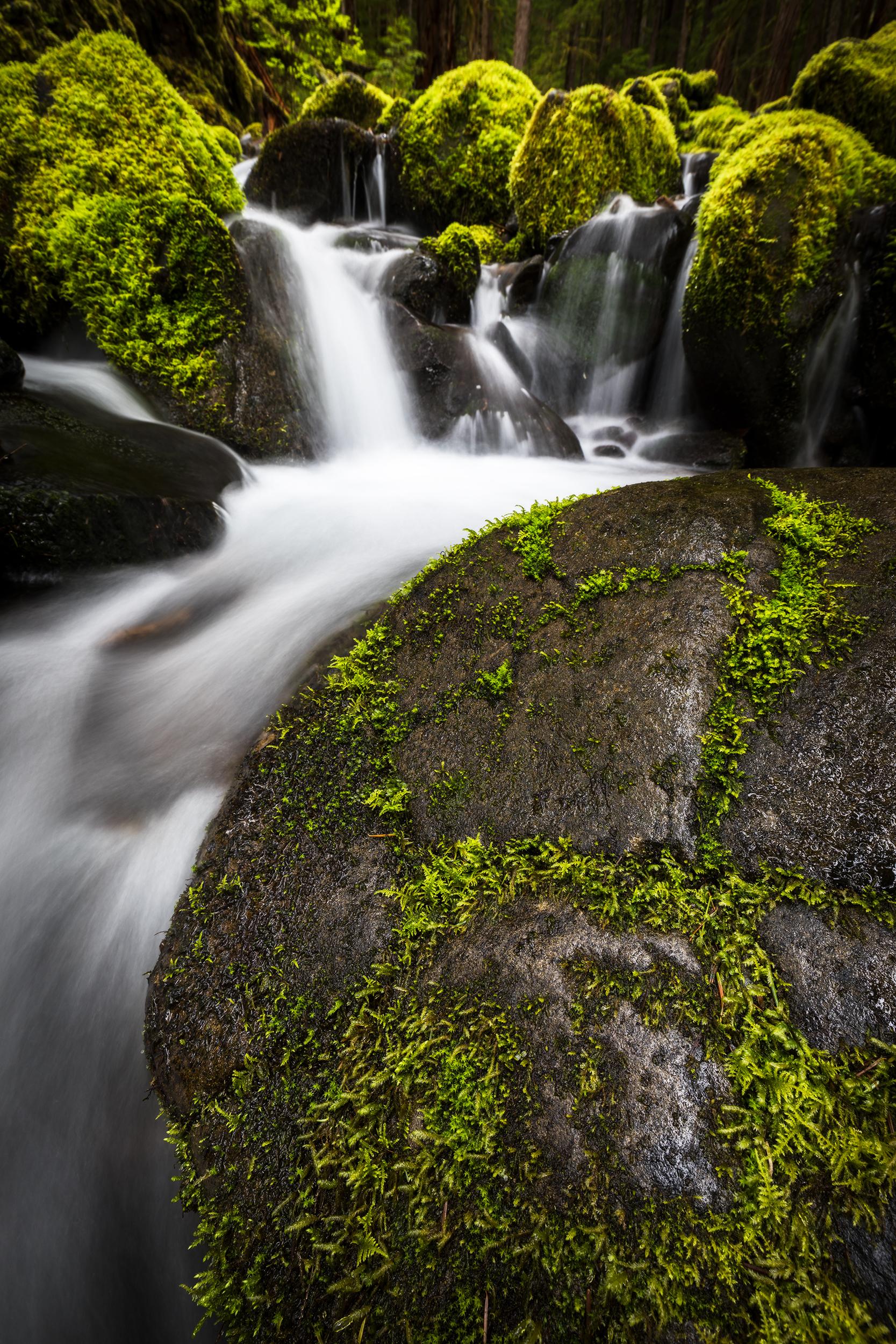 Mossy Flow.jpg