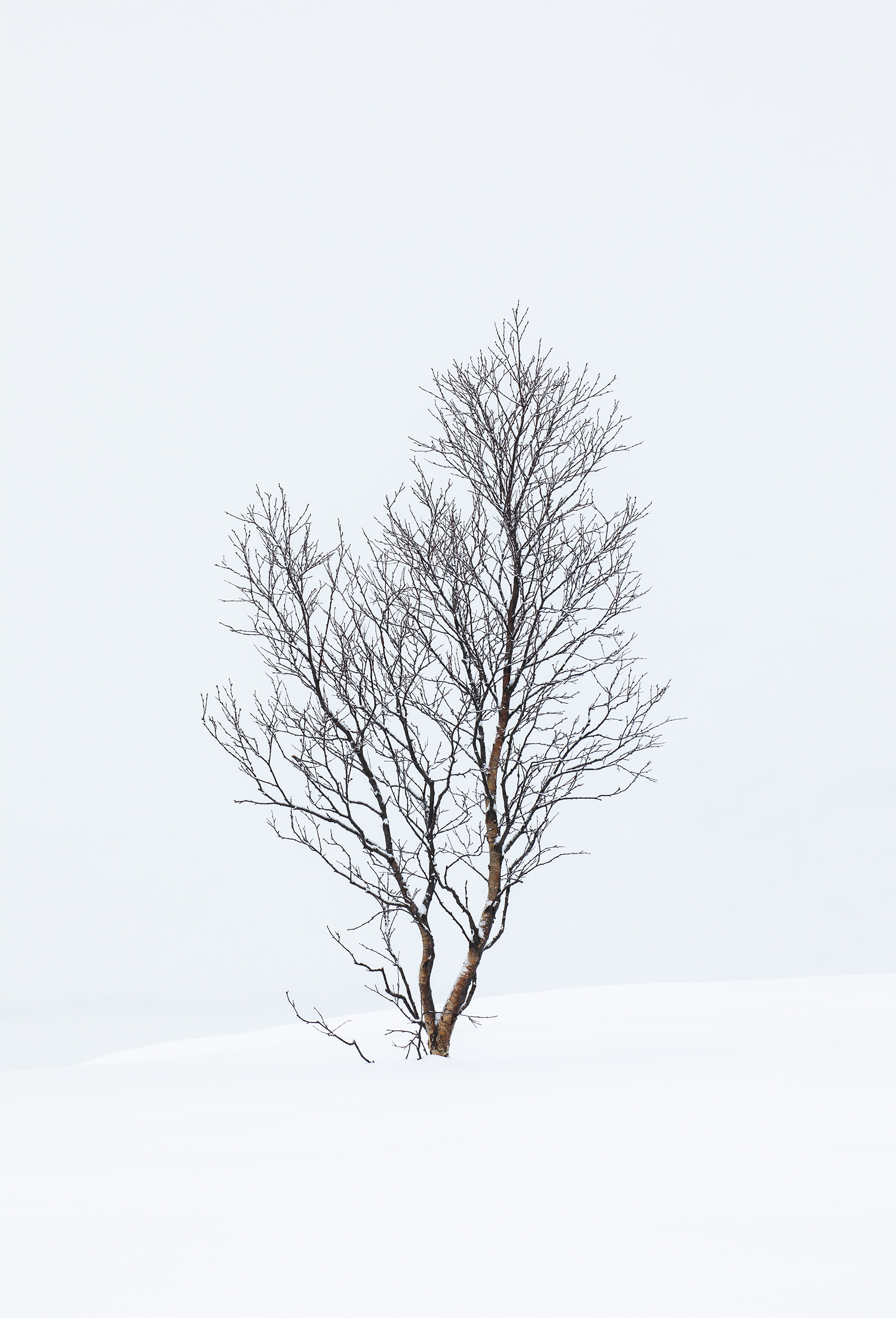 Silent Beauty.jpg