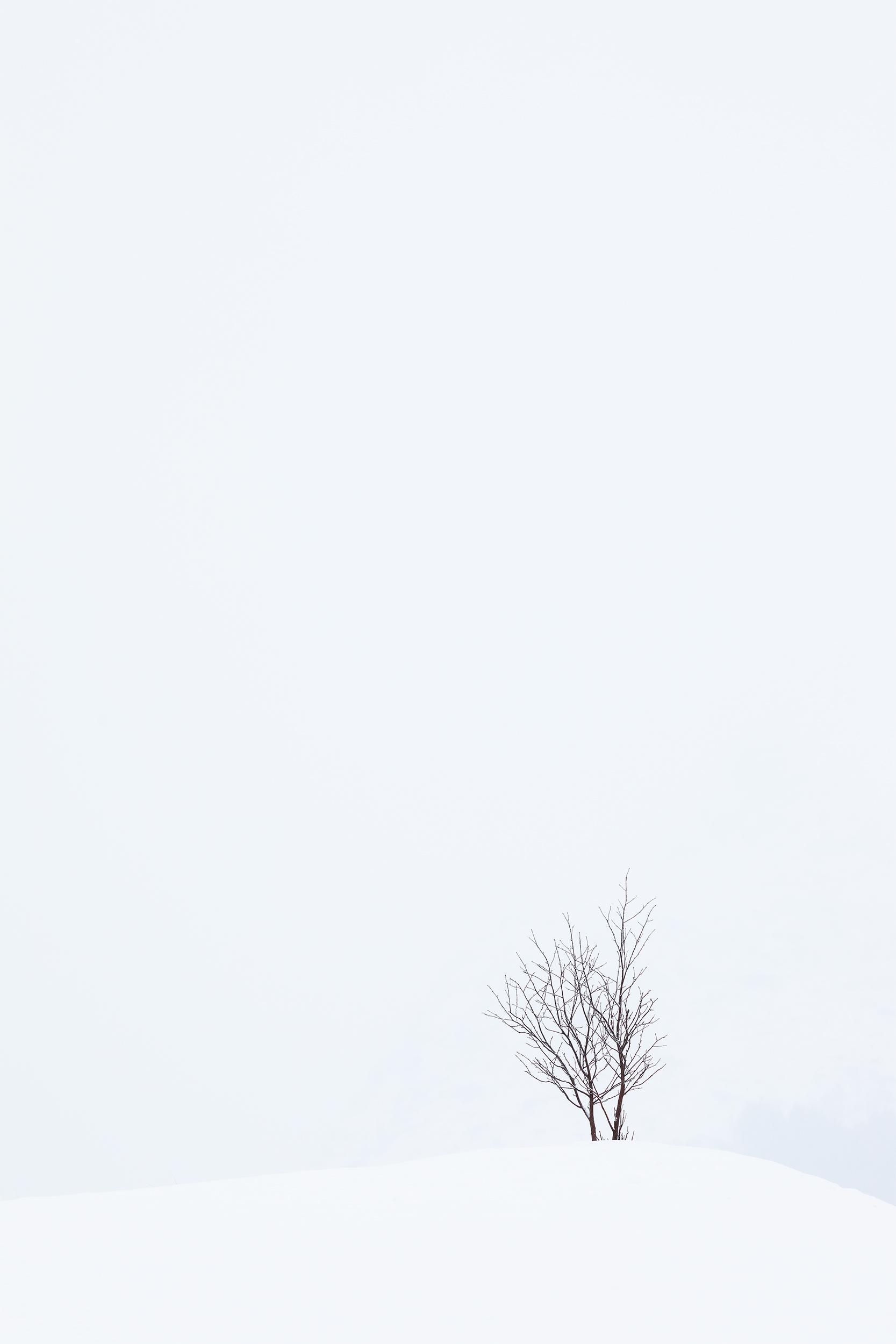 The Introvert.jpg