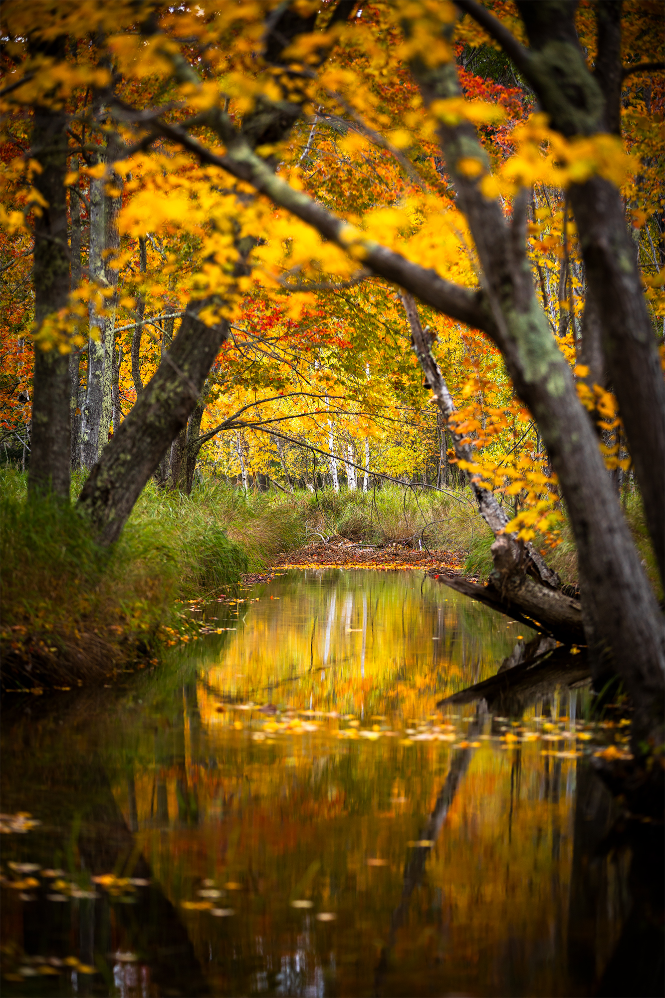 Autumn Corridor.jpg