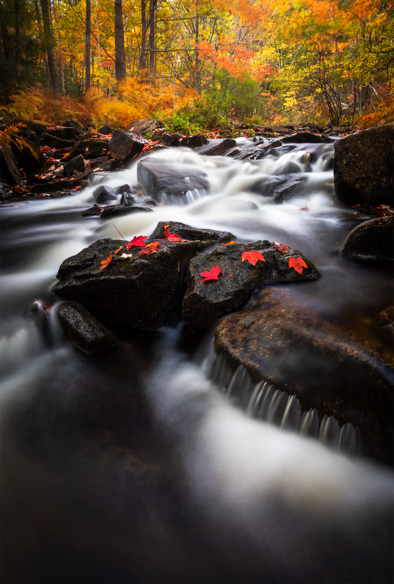 Duck Brook Autumn - 2.jpg