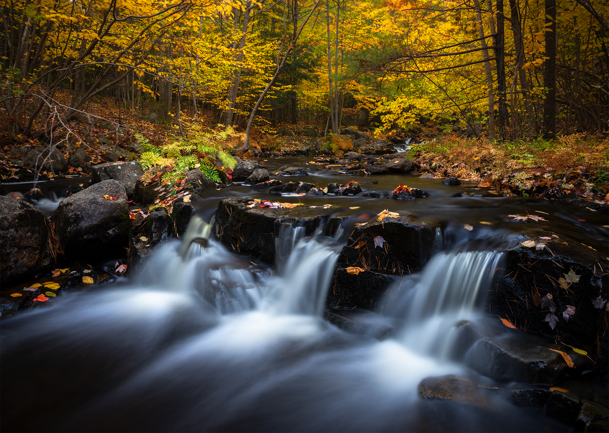 Duck Brook Autumn.jpg