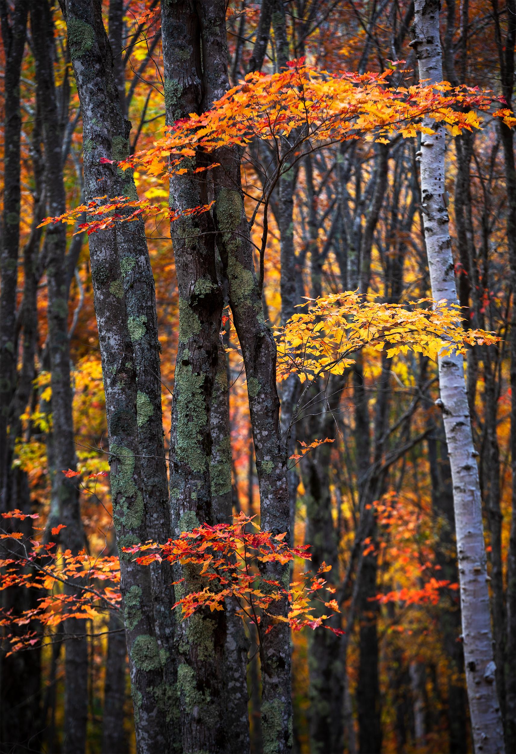 Autumnal Textures.jpg