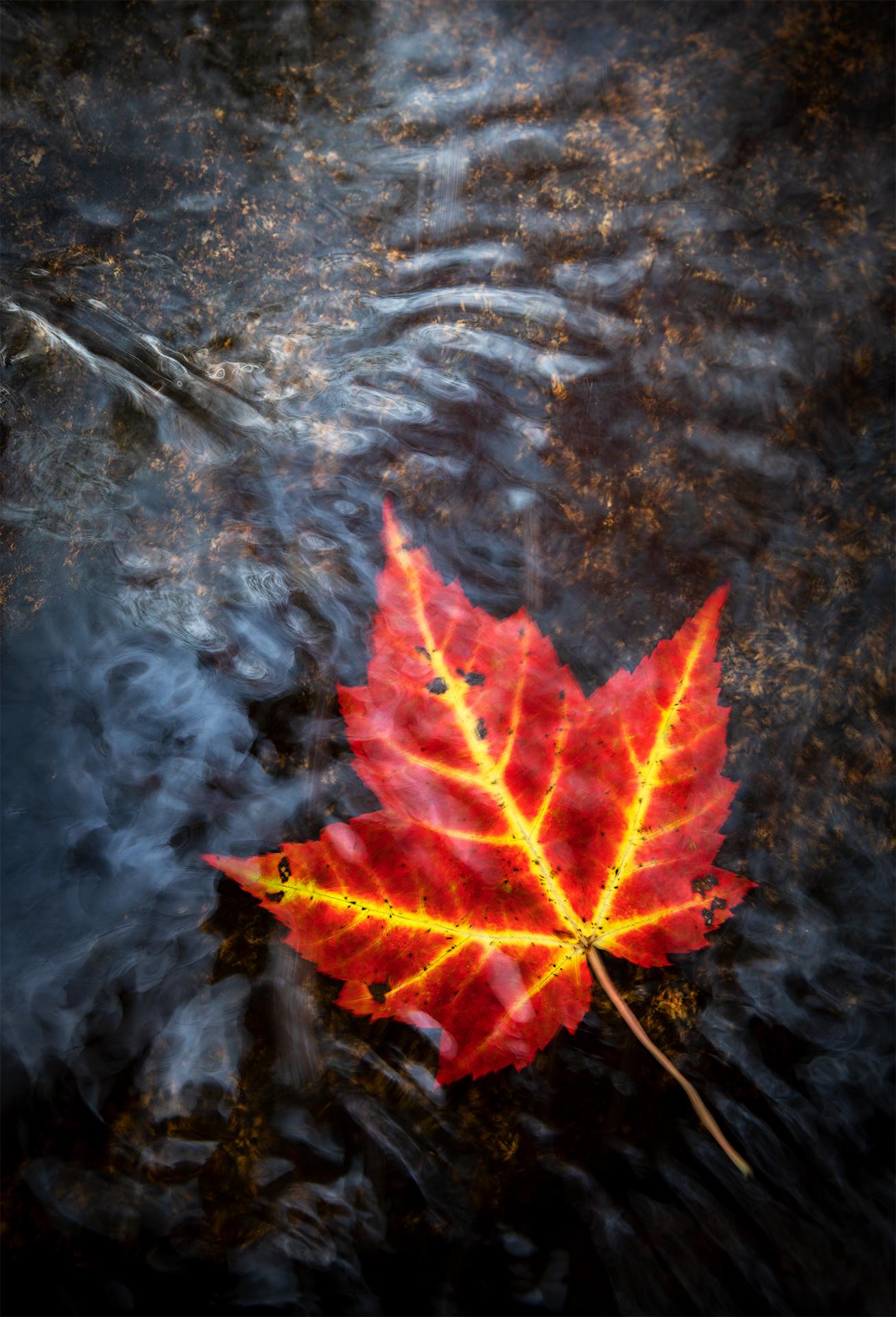 Autumn Rythm_.jpg