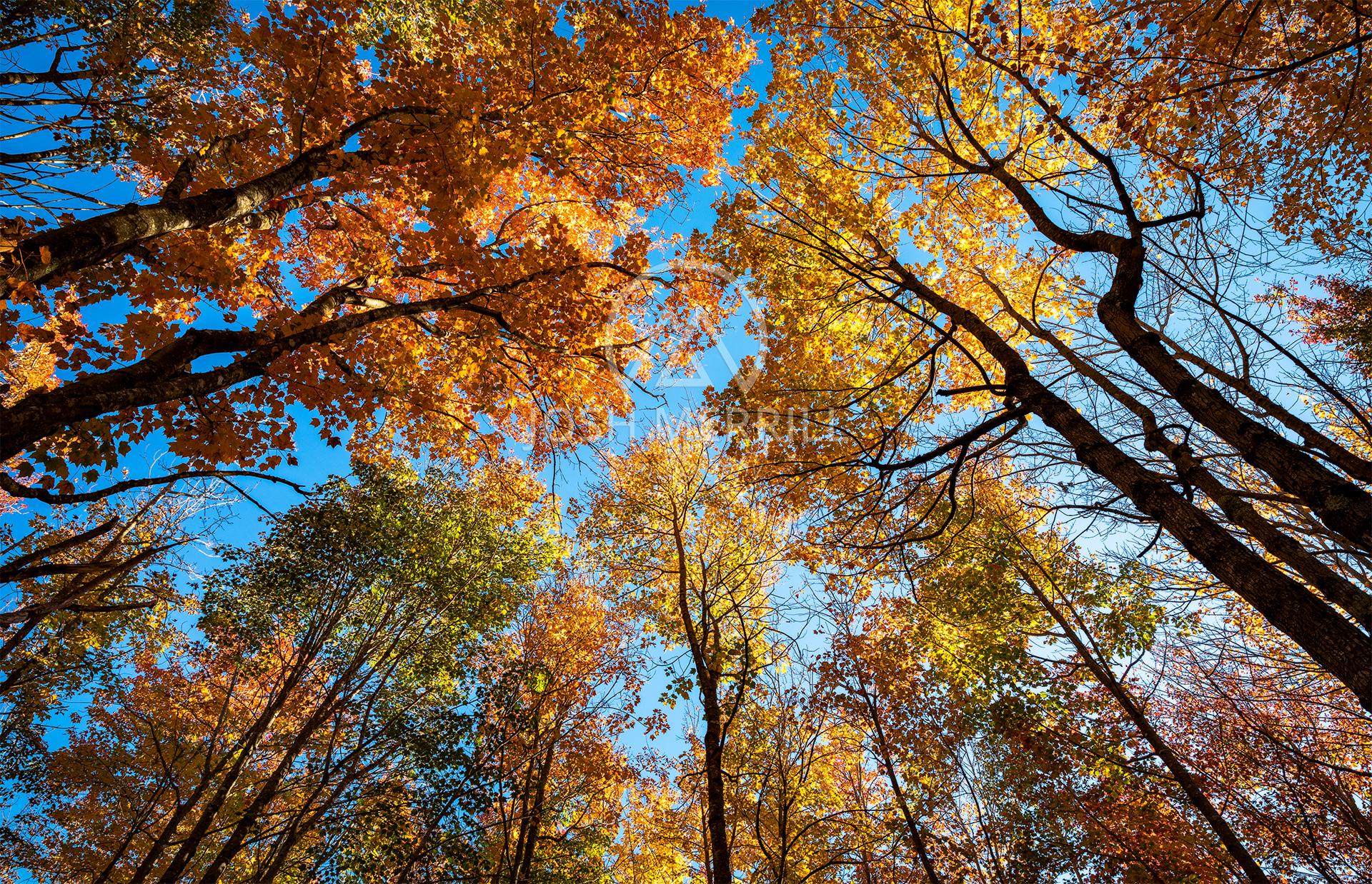 Acadian Canopy.jpg