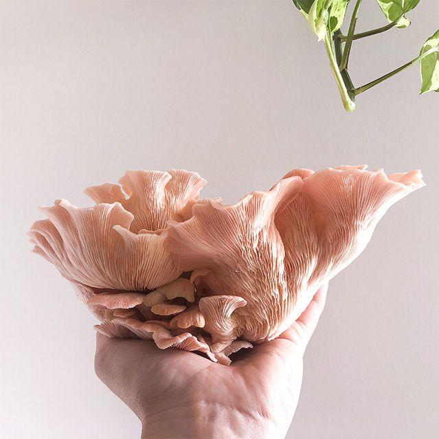 Little Acre Mushrooms