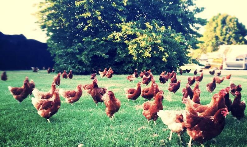 9Dorf Farms