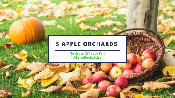 5 apple orchards.png