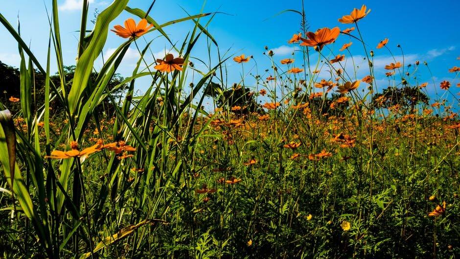 wildflowers stock.jpeg