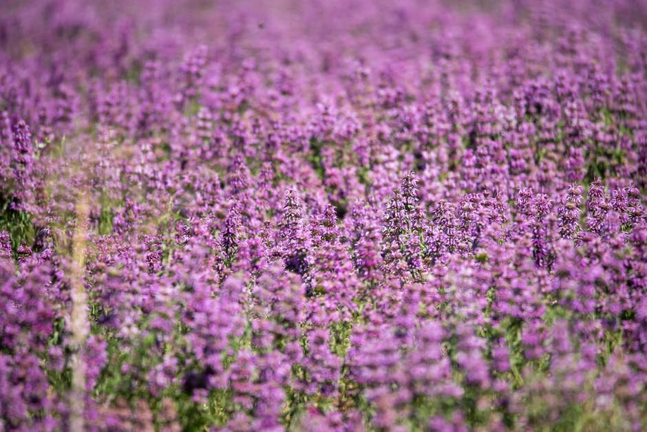 wildflowers stock 2.jpeg