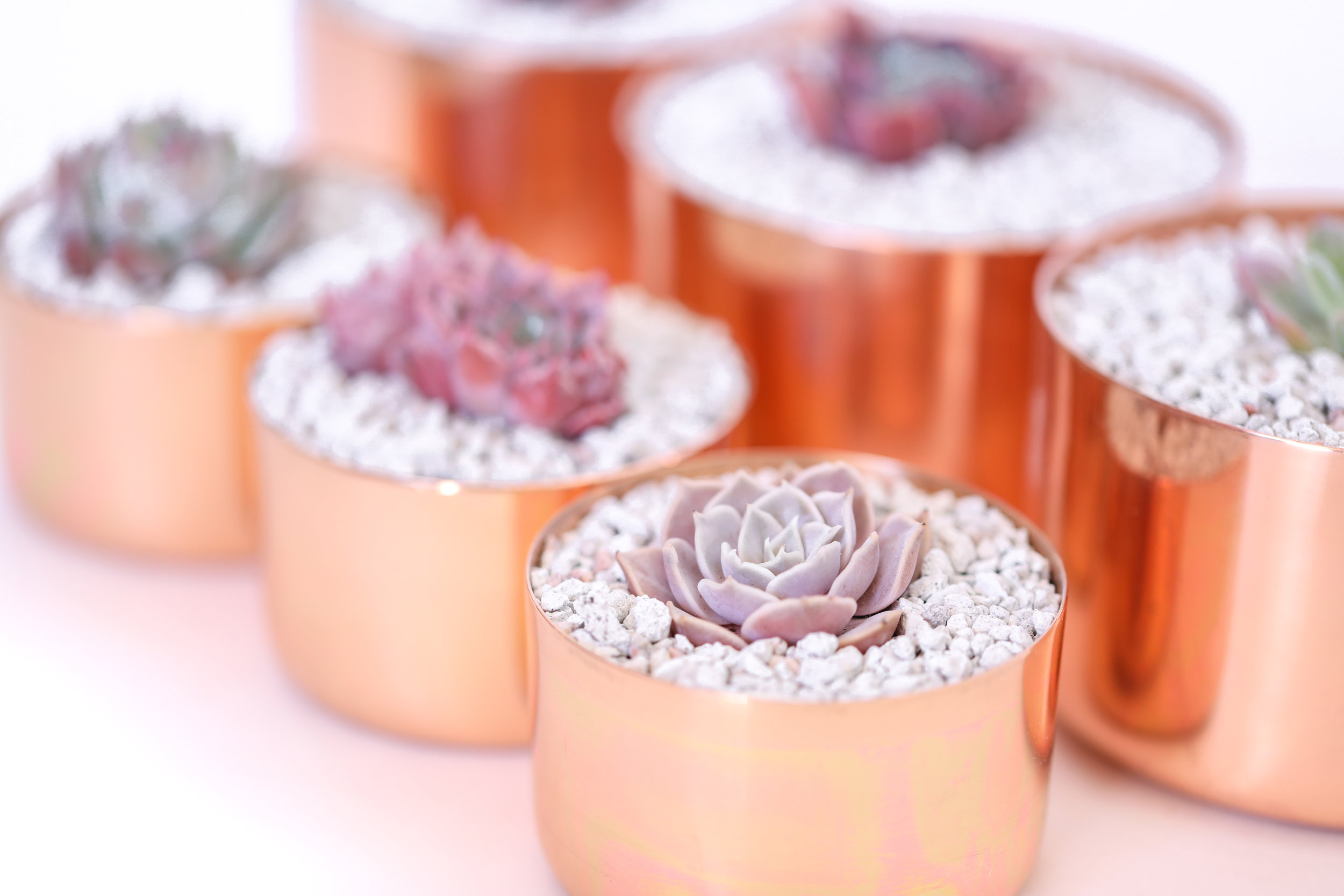 "COPPER PLANTERS ^  Who doesnt love this rose gold trend happening right now? My succulents are SO pretty in these gorgeous copper plants by  Alchemade . I am constantly asked where I got them so if you like them you can buy them  here.   4"" $18.95 each  3"" $15.95 each"