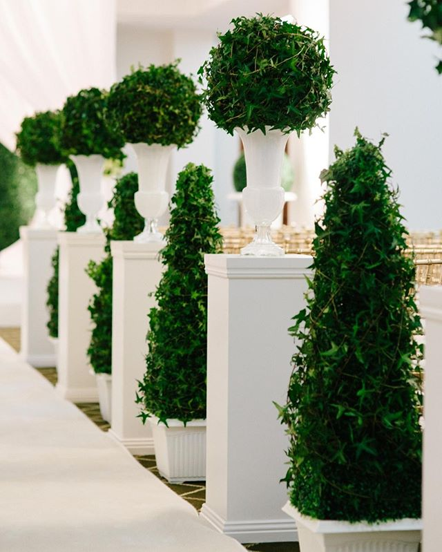 WALK THIS WAY   A grand entrance with style! ⠀⠀⠀⠀⠀⠀⠀⠀⠀ .⠀⠀⠀⠀⠀⠀⠀⠀⠀ .⠀⠀⠀⠀⠀⠀⠀⠀⠀ .⠀⠀⠀⠀⠀⠀⠀⠀⠀ Venue: @brisbanecityhall⠀⠀⠀⠀⠀⠀⠀⠀⠀ @theepicurefoodies⠀⠀⠀⠀⠀⠀⠀⠀⠀ Planner: @whitewhiteweddings⠀⠀⠀⠀⠀⠀⠀⠀⠀ 📸 Chris Hall Photography⠀⠀⠀⠀⠀⠀⠀⠀⠀ 🍃@alwaysfabulousflowers ⠀⠀⠀⠀⠀⠀⠀⠀⠀ .⠀⠀⠀⠀⠀⠀⠀⠀⠀ .⠀⠀⠀⠀⠀⠀⠀⠀⠀ .⠀⠀⠀⠀⠀⠀⠀⠀⠀ .⠀⠀⠀⠀⠀⠀⠀⠀⠀ .⠀⠀⠀⠀⠀⠀⠀⠀⠀ #eventdesign #floralinstallation #weddingideas #eventdecor #brisbaneweddings #weddingceremony #weddingstylist #weddedwonderland #ruffledworthy #bridetobe #ido #ceremonydecor #weddingarbour #weddingflowers #floralinspiration #weddinginspiration #weddingtrends #luxurywedding #queenslandwedding #engaged #bridal #brisbaneweddingplanner #australianwedding #brisbanebride #weddingstyle #realwedding #eventhirebrisbane #weddingday #eventflowers #weddinginspo