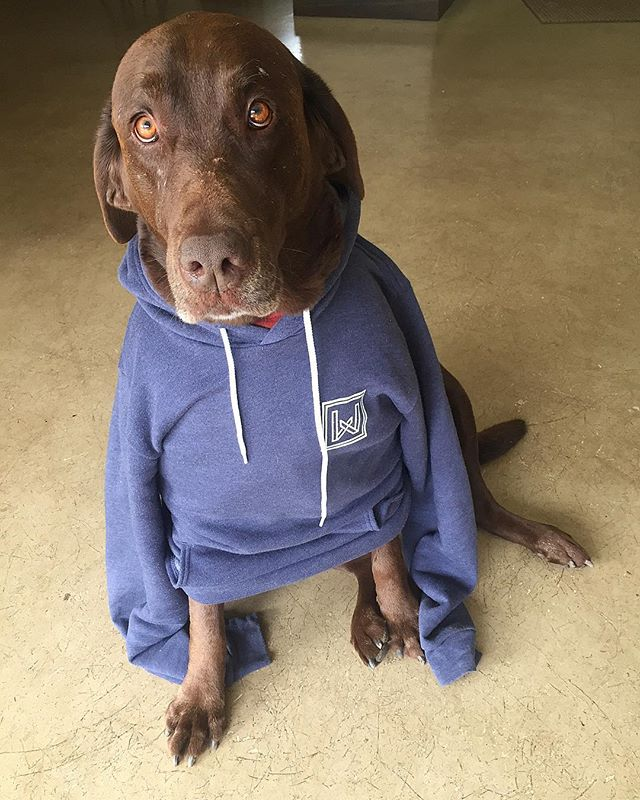 Our #1 fan. Hank. He was not happy with us that it took this long to get him a hoodie