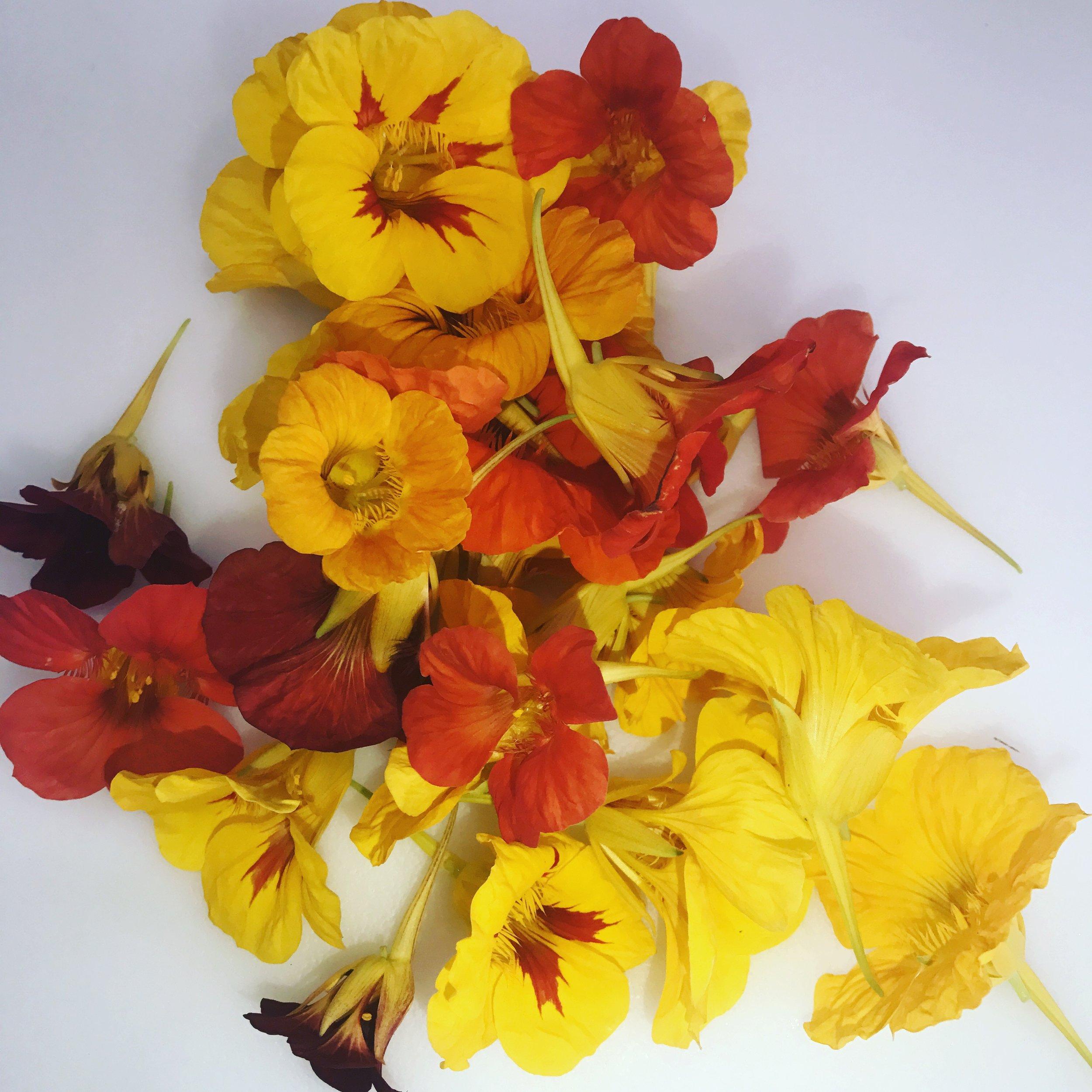 Flowers iphone.JPG