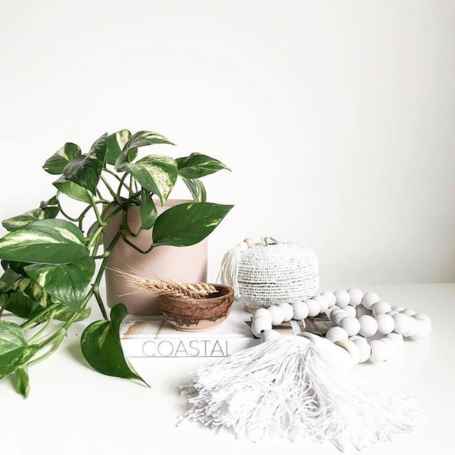 Who doesn't love a living green cascading plant babe?! 🌱🌿❤️ . . . . Image & styling @scandilane_ 🌿 . . . #plantlover #plants #plantstagram #planthoarder #iloveplants #indoorjungle #homedecor #plantlife #pausewithplants #melbournegifts #interiorinspo #melbourneplants #melbourneplantclub  #buddingvineco #plantstyling #instaplants #houseplants #plantgang #botanical #indoorgreen #homestyle #interiorstyling #greenyourfeed