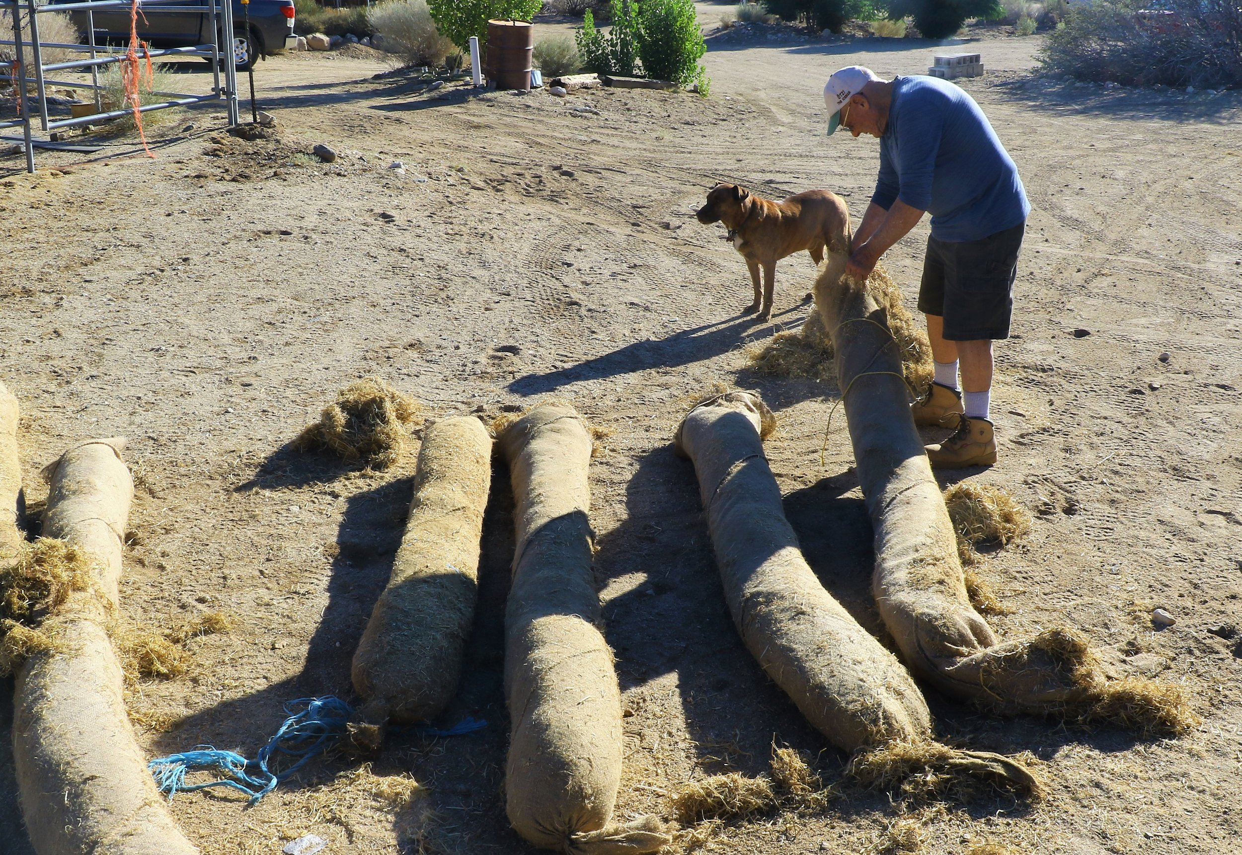 August 2018 Larry Frank and his dog, Quill, loads the salvaged wattles onto the trailer.