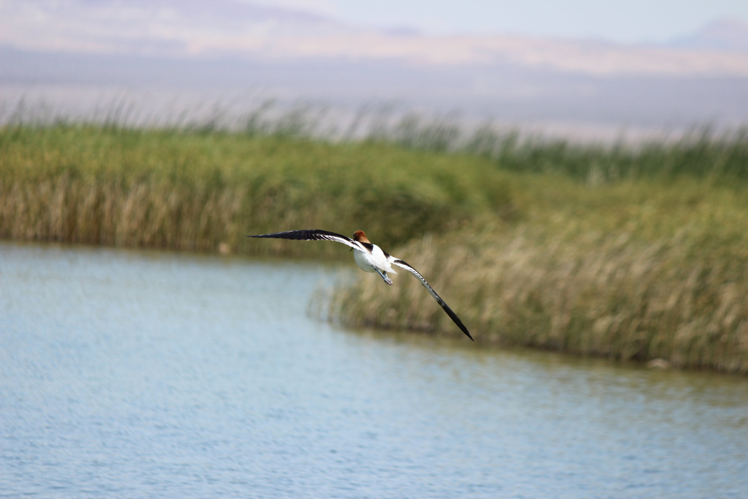 Harper Dry Lake Marsh  is a Watchable Wildlife Viewing area and an Area of Critical Environmental Concern (ACEC). It's also an important stopping place for thousands of migrating birds.