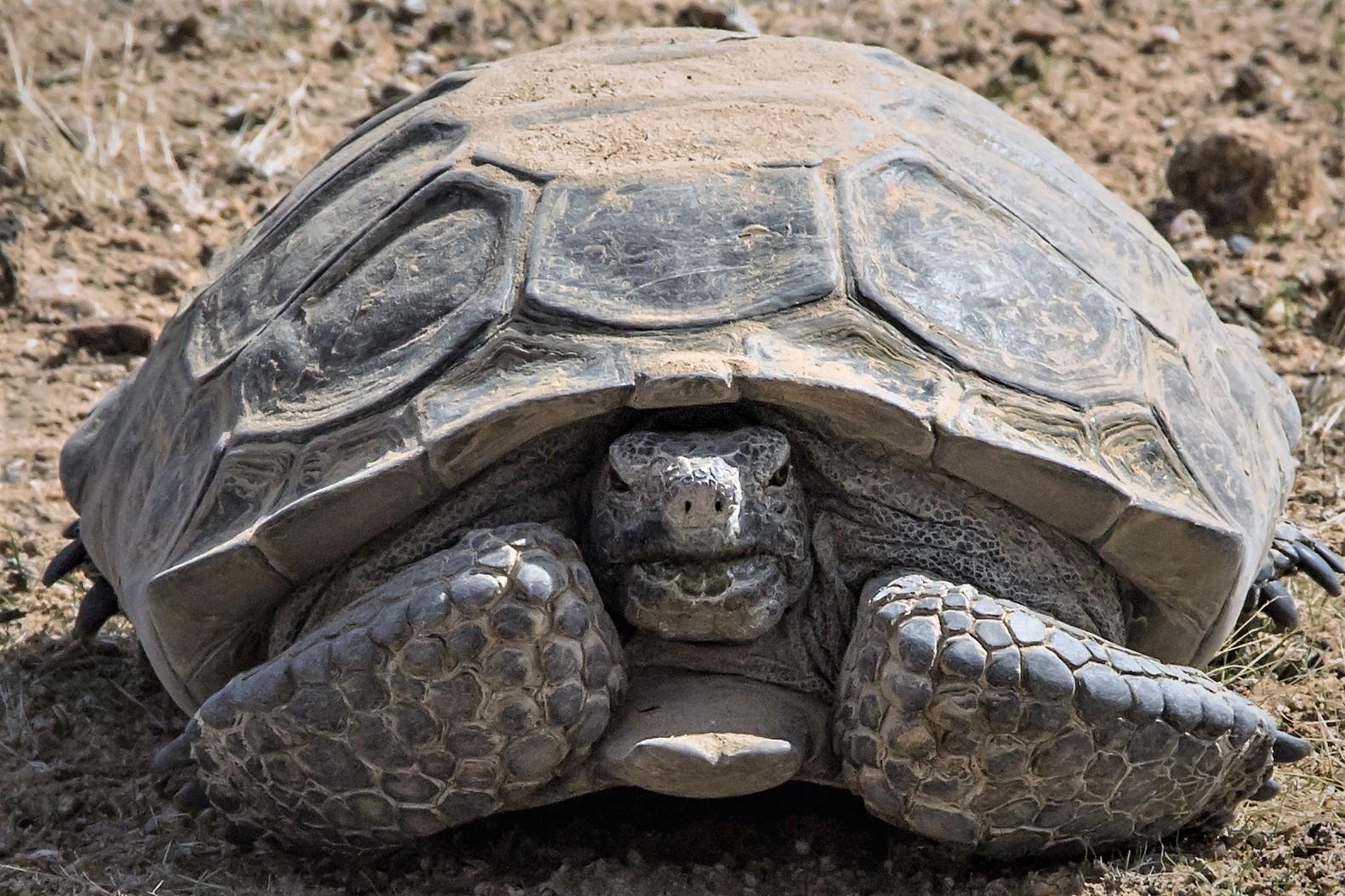 Tortoise event-1-2ww.jpg