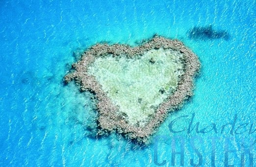 img_heart_reef copy.jpg