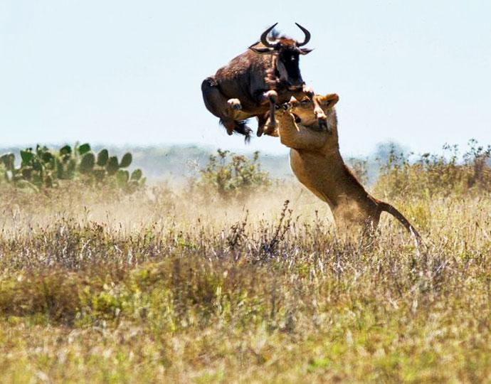 serene Kenya 2.jpg