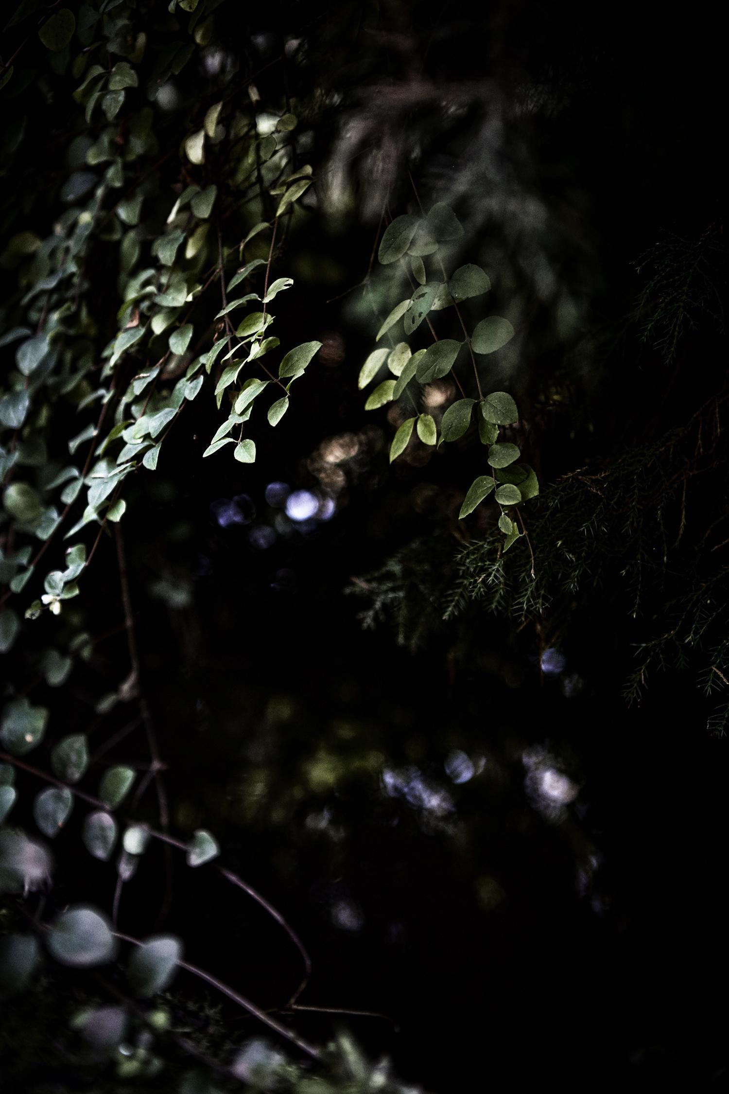 Leaves_091.jpg