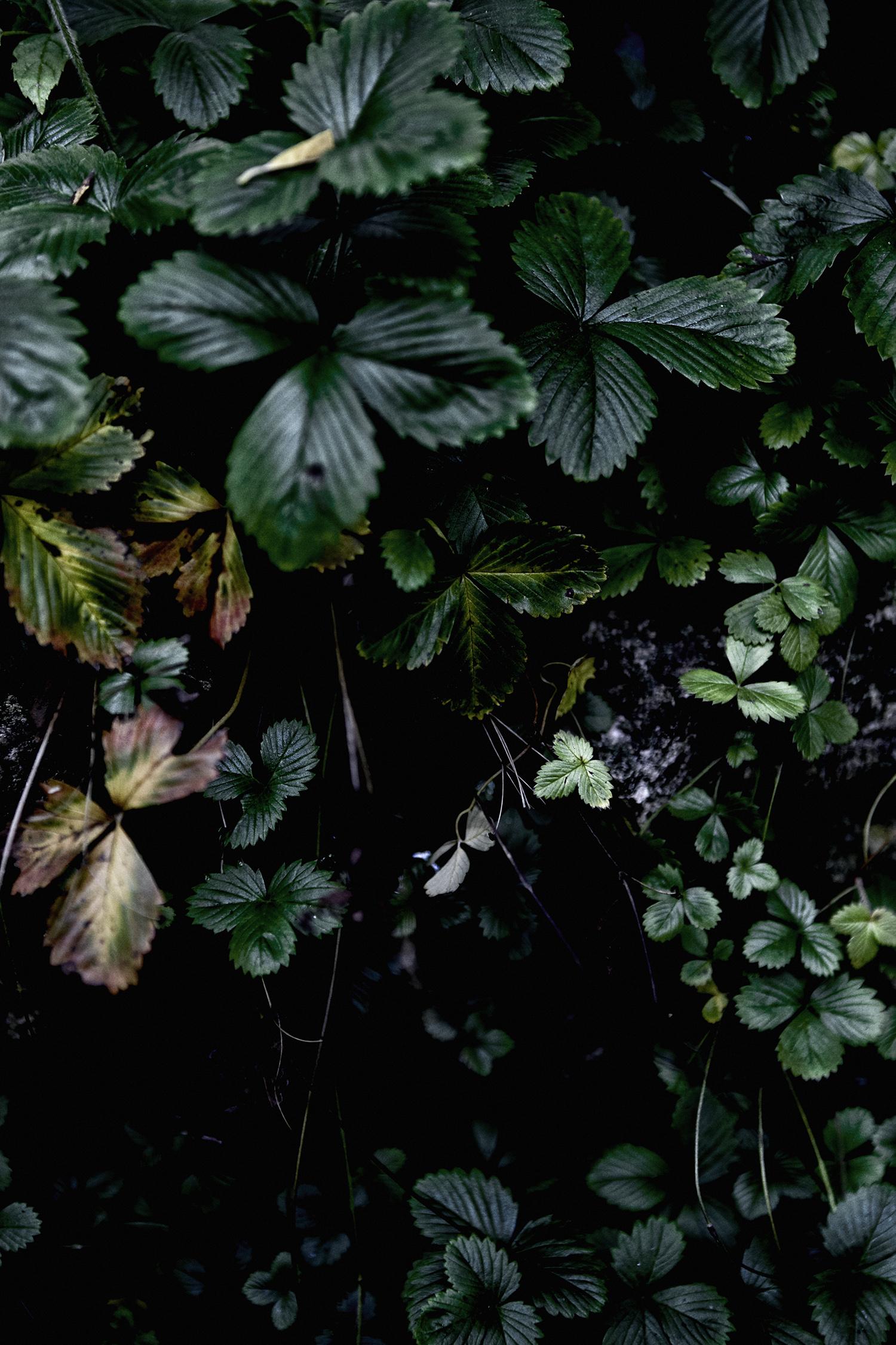 Wild_Strawberries_068.jpg