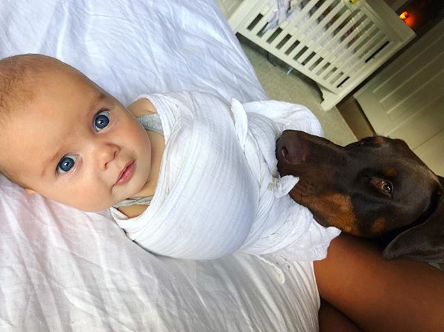 Buddy takes his 'Guard Dog' reputation very seriously! 👀 🐕 👶🏻 #doberman #dobermanpinscher
