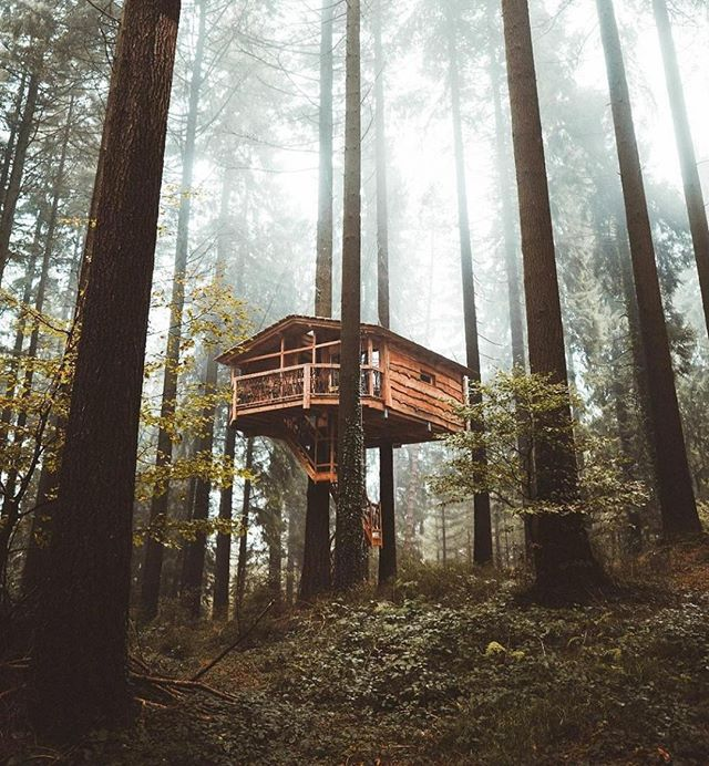 Was this anyone else's childhood dream? Tag someone you'd love to share this treehouse with!⁣ Photo by @leireunzueta⁣ ⁣ ⁣ ⁣ #natgeo #vscocam #vscotravel #iamtb #stayandwander #mytinyatlas #passionpassport #wanderlust #travel #theglobewanderer #travelstoke#travelawesome #dametraveler #travelfarther #darlingescapes #bestvacations #destinationearth #travelgram #sheisnotlost #visualsoflife #neverstopexploring #womenwhoexplore #thewanderlover #travelblog 🗺⁣