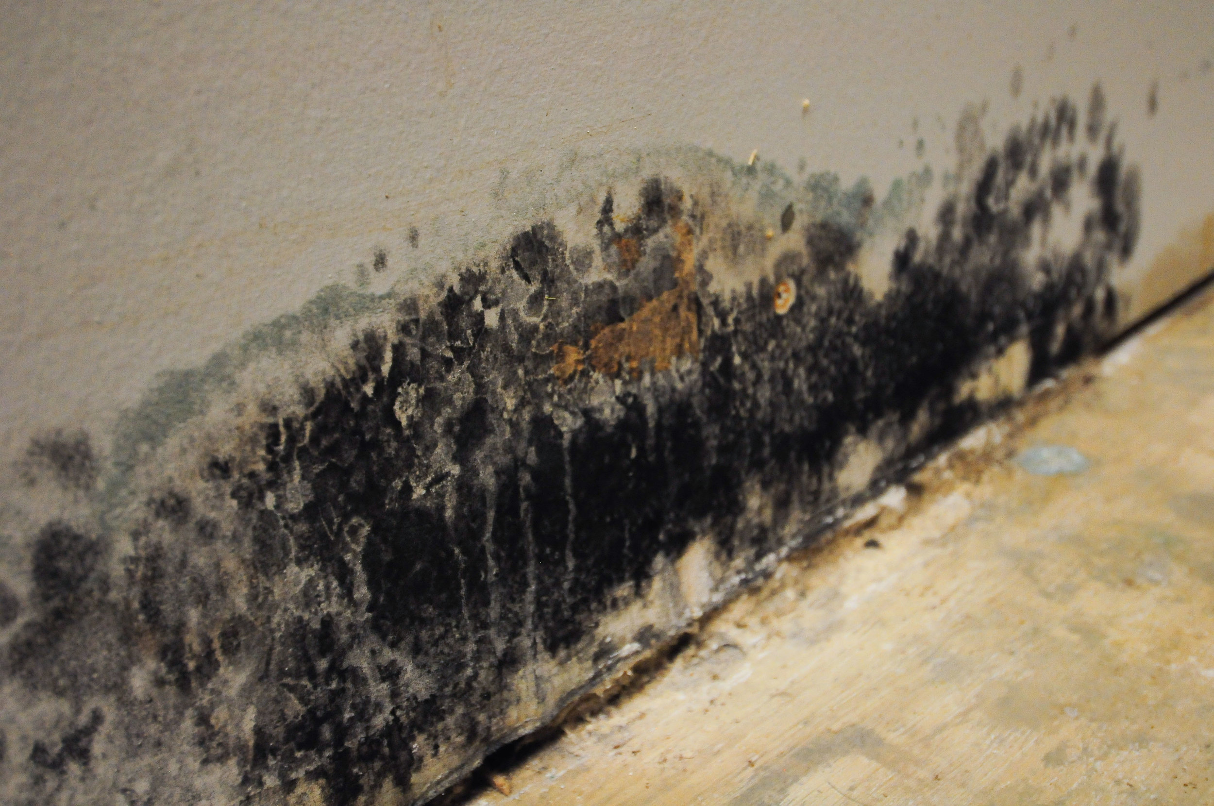 mold may look this obvious, but other times it simply looks like a stain or dark spot; image source:  servicemasterofcharleston.com