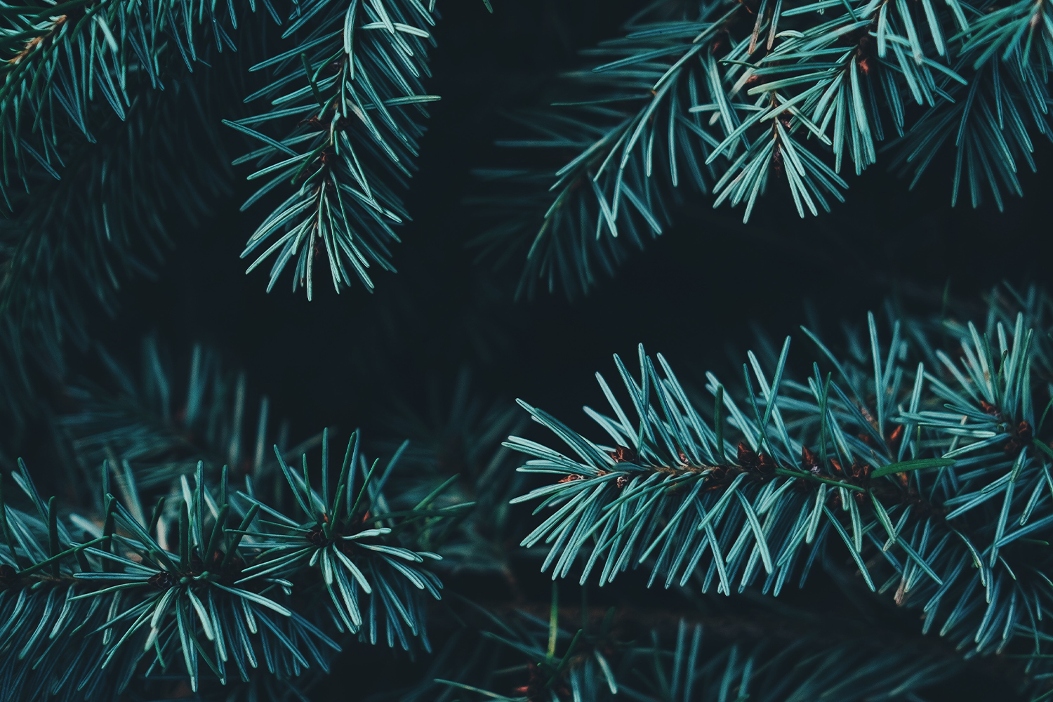 Christmas resources -