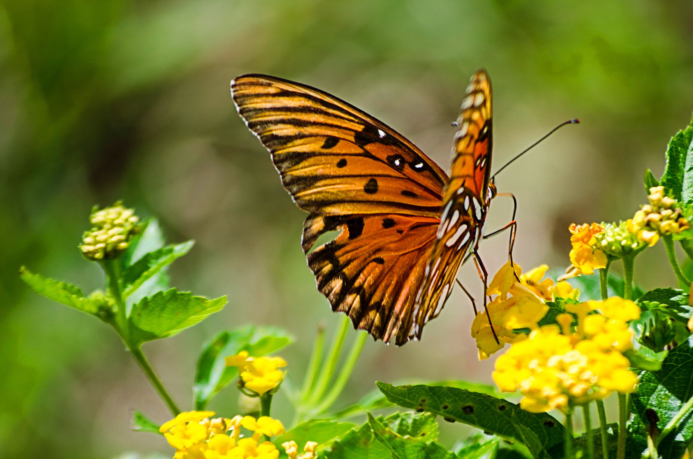 animal-butterfly-flowers-9632__web.jpg