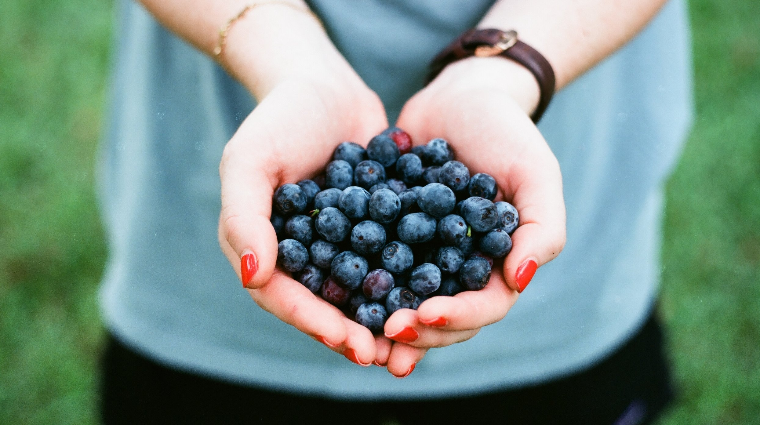 Blueberries are so easy to grow. There is a native blueberry with evergreen foliage that changes color with the season. Enjoy berries in June and harvest the leaves for tea in January and February.