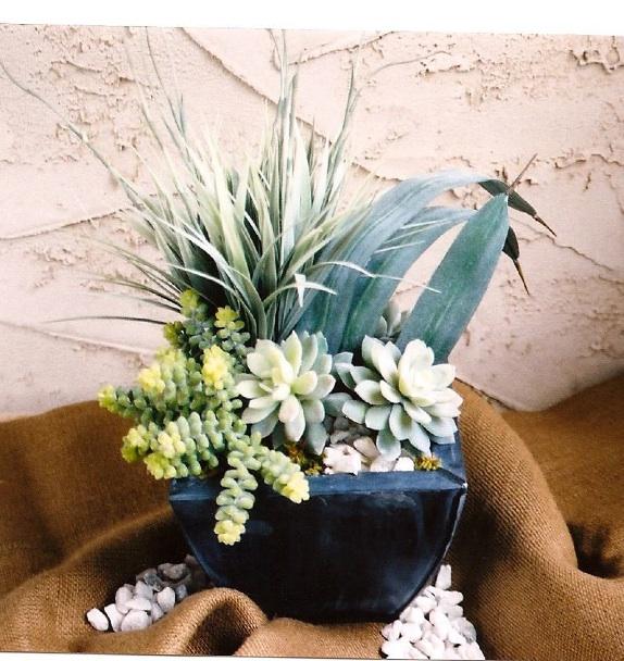 succulentarrng.jpg