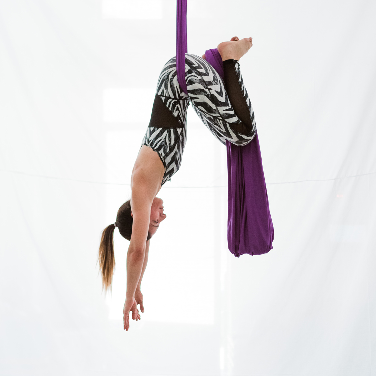 zebra-hanging.jpg