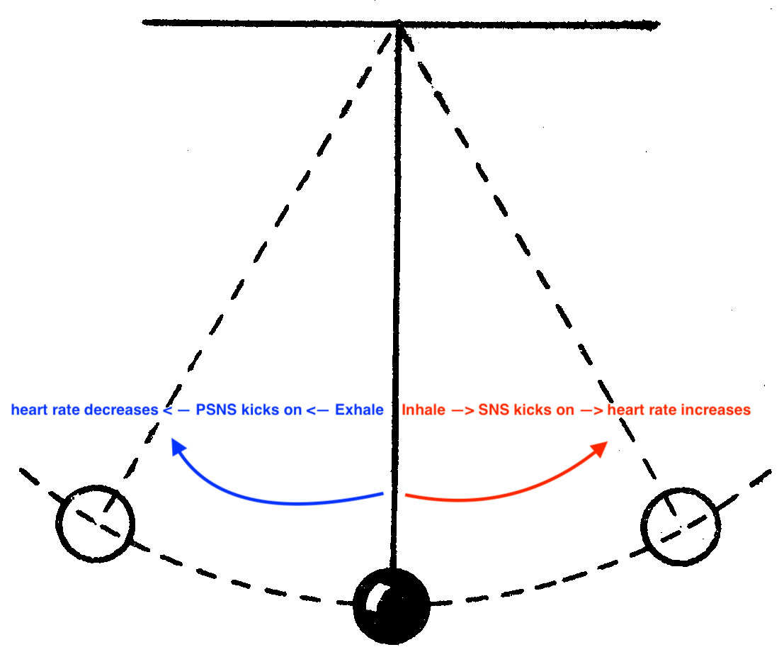SNS-PSNS heart rate pendulum.png
