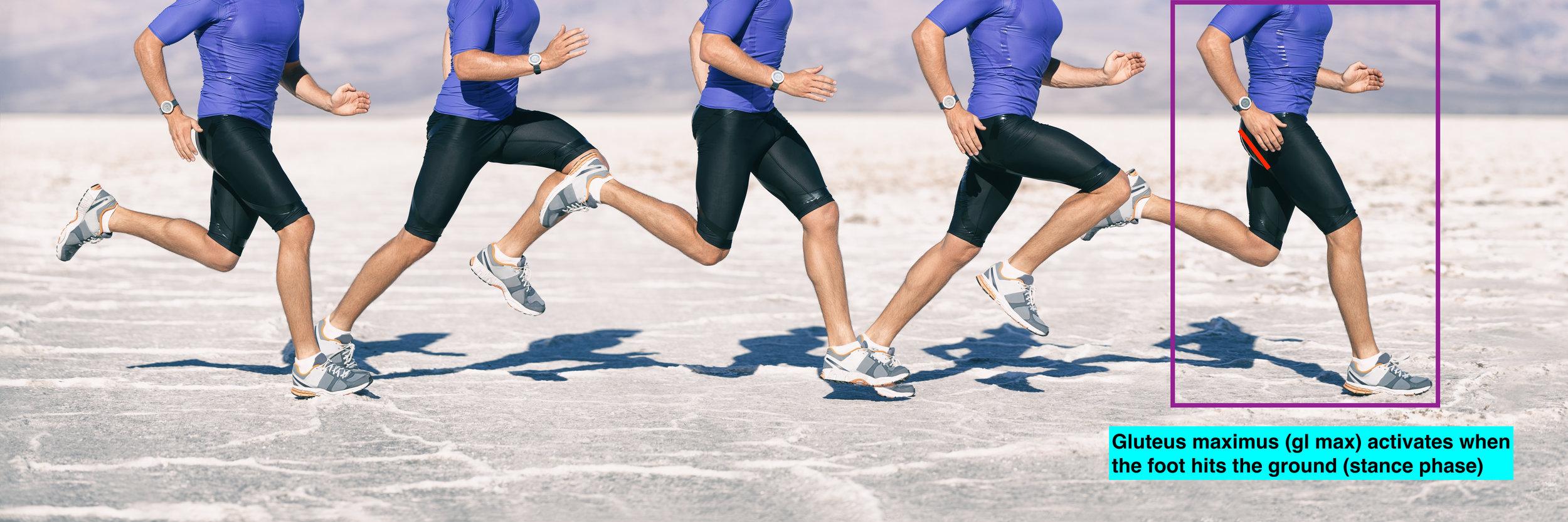 Running gait biomechanics glute maxjpeg.jpeg