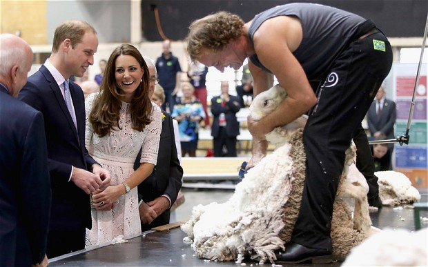 """While touring an Alpaca Farm in New Zealand, a farmer handed some freshly sheared wool to Kate. She turned to William and said """"you need it more than me"""", pointing to his head."""