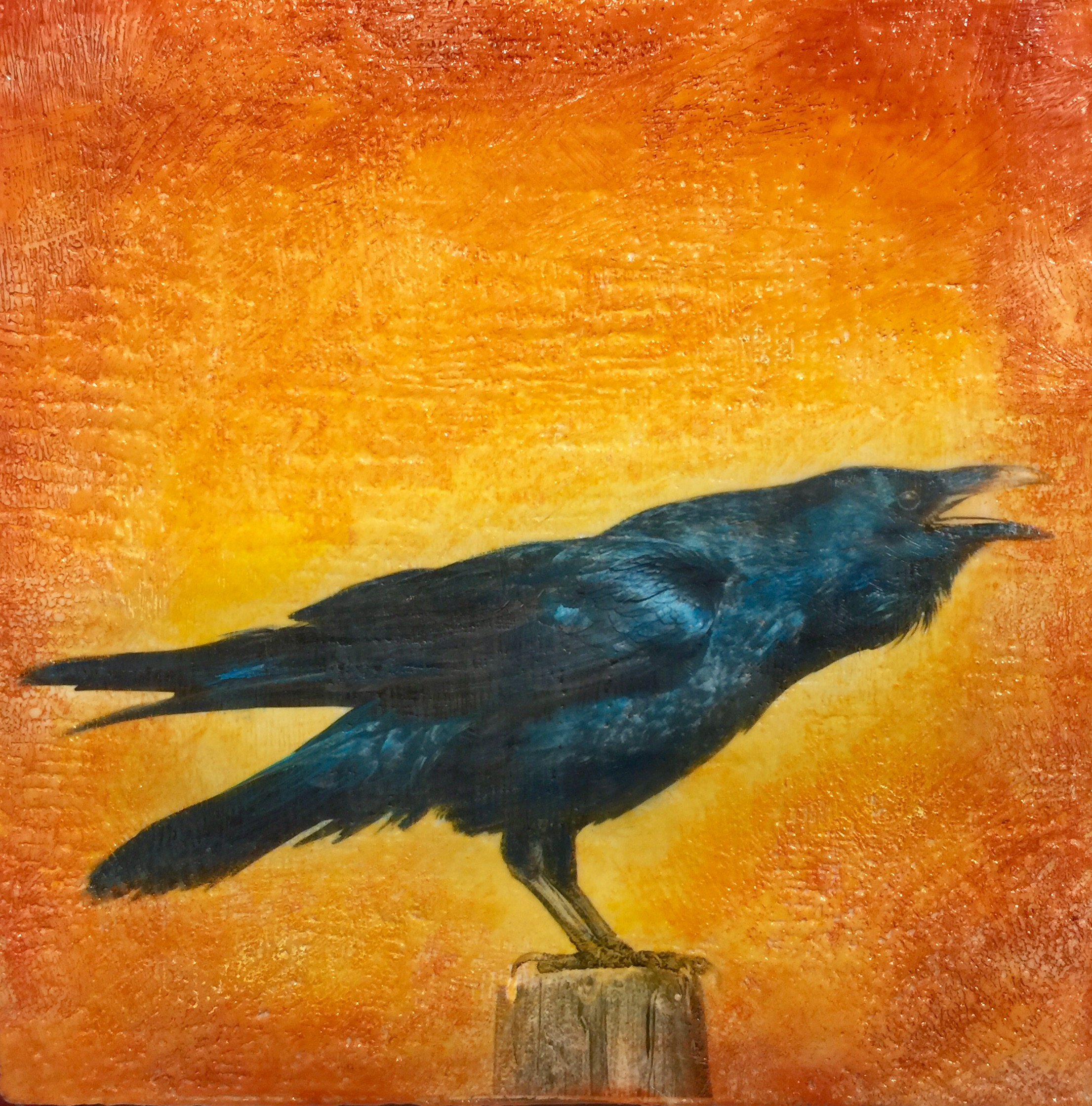 raven crow landing.jpg