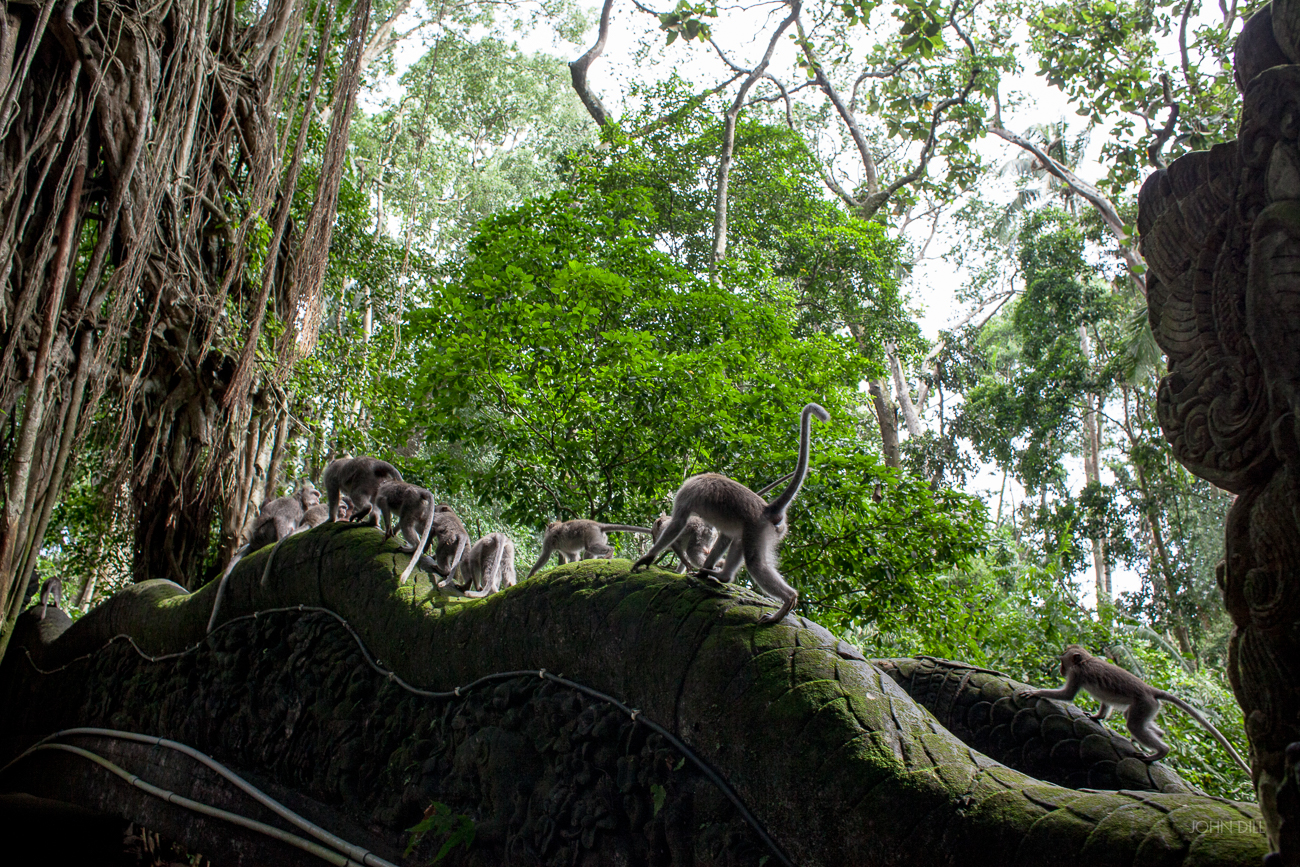 John_Dill-Bali-21.jpg