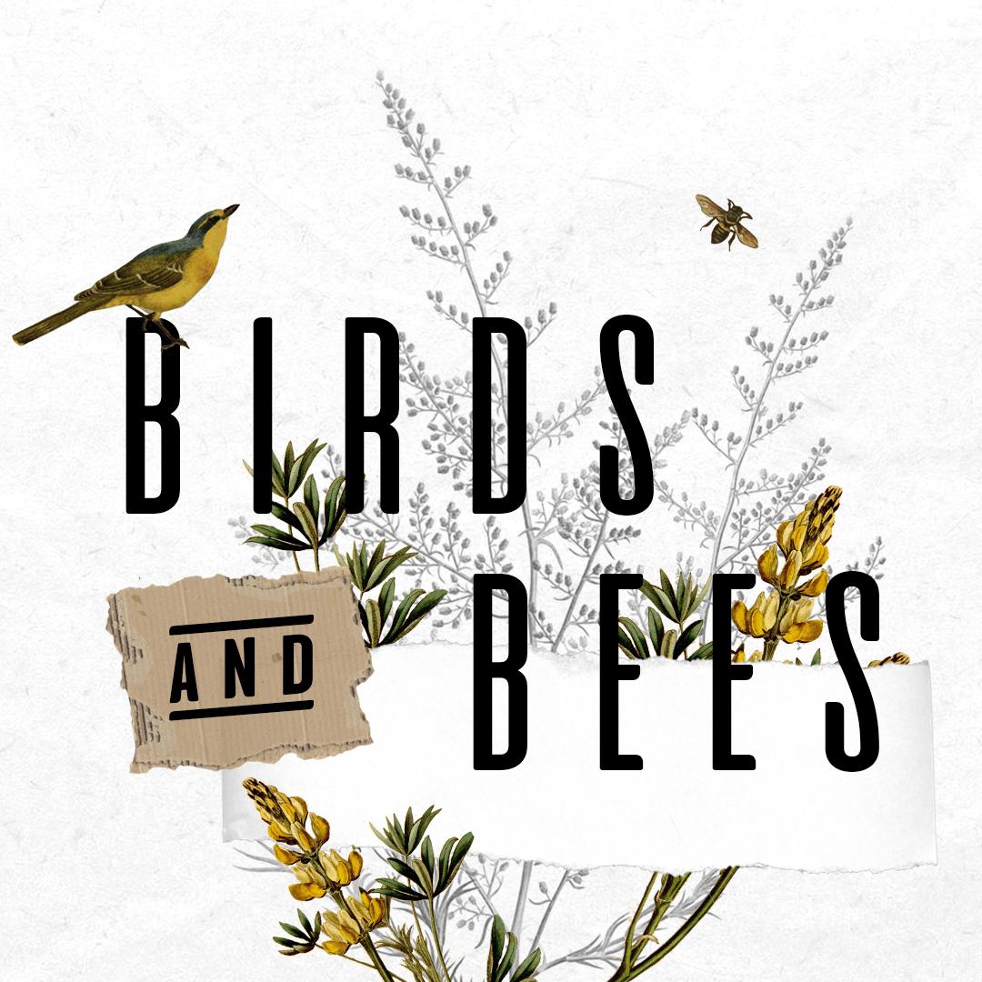 Birds + Bees.jpg