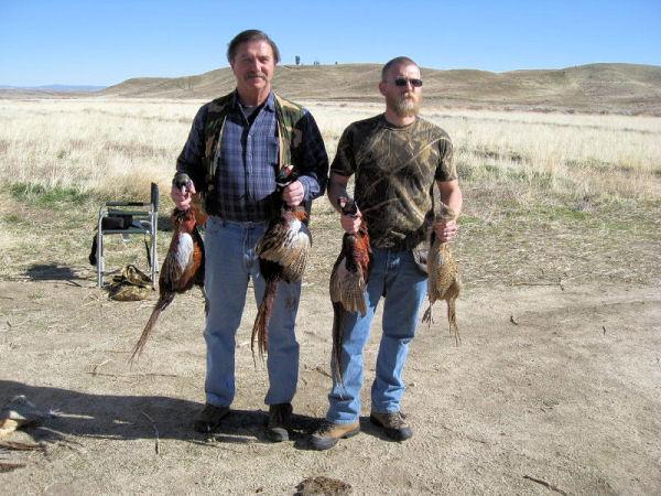 2009_pheasant2.jpg