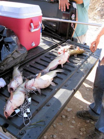 2009_catfish.jpg