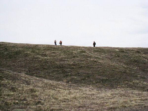 2010_pheasant5.jpg